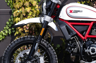 Ducati Scrambler Desert Sled Front Mudguard & Suspension